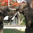 Elephant camo